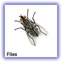 flies fummigation pest snakes safety plastic-garbage-can dustbin Refuse-Pack lagos nigeria lekki company