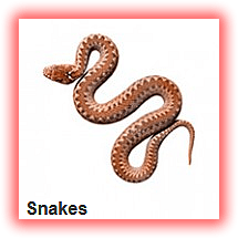 snakes safety plastic-garbage-can dustbin Refuse-Pack lagos nigeria lekki company