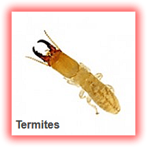 termites-flies fummigation pest snakes safety plastic-garbage-can dustbin Refuse-Pack lagos nigeria lekki company